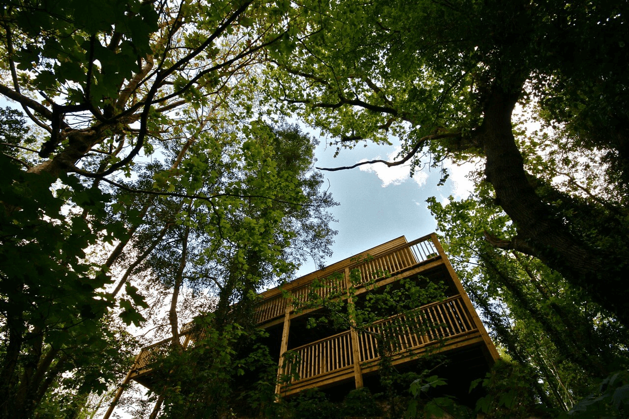 Road trip to a treehouse
